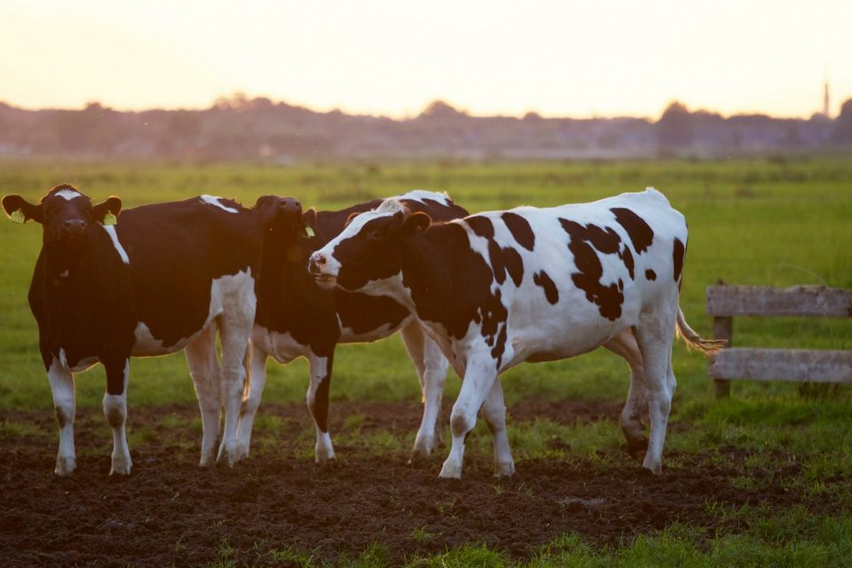 agriculture-animal-animal-photography-422218
